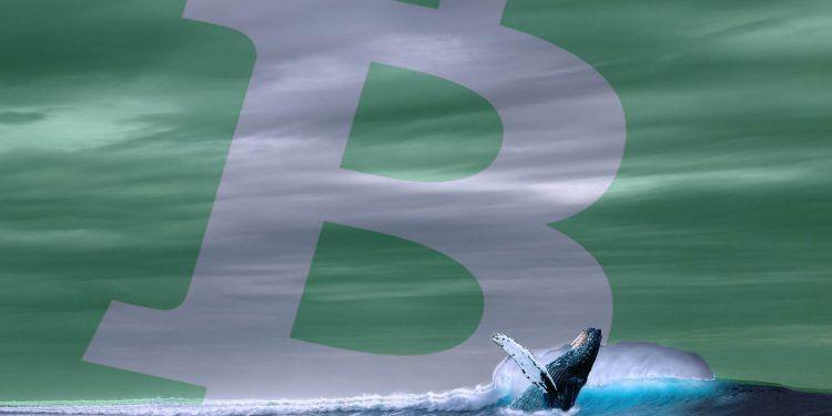 Pixabay.com / Whale