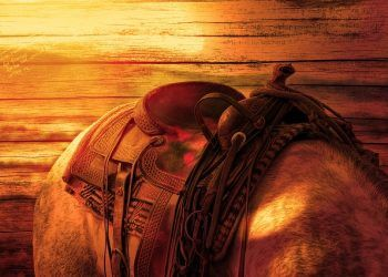 Pixabay.com / Horse Saddle
