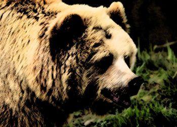 Pixabay.com / Bear
