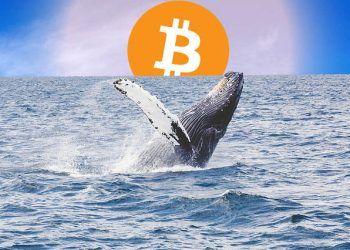 Bitcoin Whales / Pixabay.com / Editing