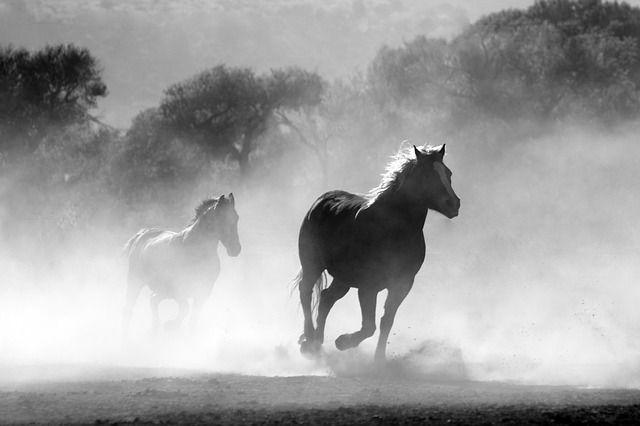 Bhakti2 / Pixabay.com / Freedom