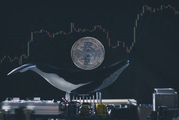 Bitcoin whales are hodling, is a bull run coming up?