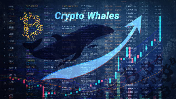 Bitcoin Whales Splash Into The Turbulent Waters Accumulating 122.5K BTC