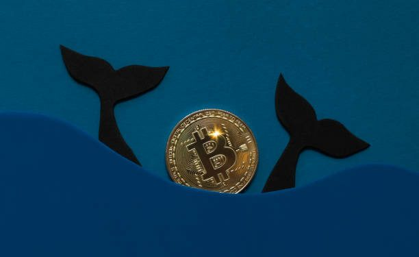 Millionaire Bitcoin Whales Buy 90,000 BTC Within 25 Days