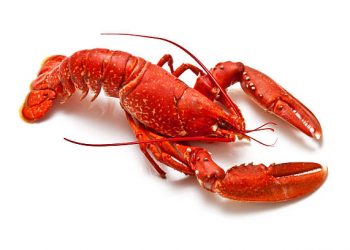 Lobby Lobsters NFT Sale Raises $1M In 1 Hour To Enhance DeFi Lobbying Efforts